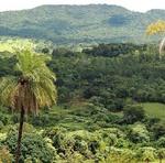 Os alertas de desmatamento no bioma amazônico no Estado do Tocantins caíram 78,5% em 2019 com relação ao ano anterior, de acordo com o Instituto Nacional de Pesquisas Espaciais