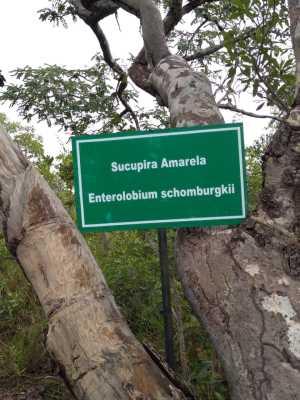 Identificação de espécie  nativa do cerrado