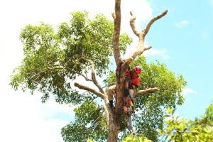 Bombeiro militar no alto da árvore fazendo o corte dos galhos