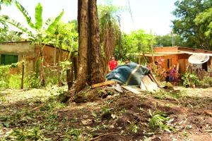 O pé de ipê ameaçava cair sobre as casas depois dos fortes ventos em Palmas