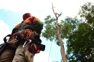 Bombeiro militar usa equipamentos de rapel para subir na árvore e executar os cortes