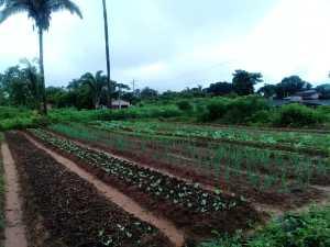 Hortaliças estão entre os destaques de produção orgânica