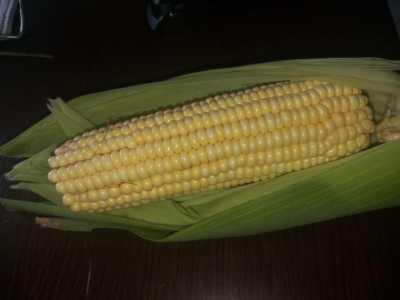 As sementes e demais insumos para a plantação do milho, foram doados pelos servidores da UPF