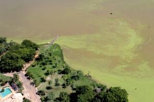 Manchas verdes na região próxima ao setor Bertaville, região sul de Palmas