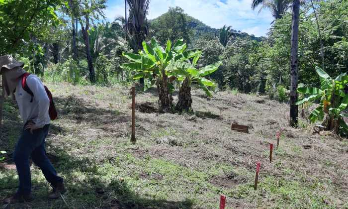 Restauração na Área de Proteção Ambiental Serra do Lajeado