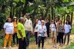 Em Ivaporunduva, é possível fazer uma trilha guiada até o bananal orgânico