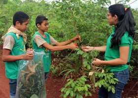 O PAM busca fortalecer a responsabilidade socioambiental das crianças e adolescentes da rede pública de ensino