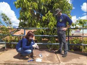 Monitoramento da mosca da carambola é intensificado na divisa do Tocantins com o Pará