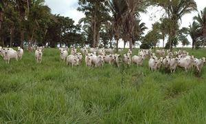 Uso de tecnologias propicia a recria a pasto mais rentável e sustentável na pecuária de corte
