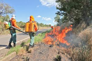 Aceiro negro às margens da TO-010 coloca fim à massa de vegetação seca e diminui risco de incêndio florestais