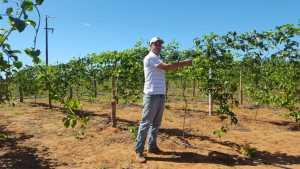 Pretensão é abastecer mercado de polpa de maracujá em Araguaína e região
