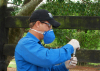 Vacinação contra brucelose