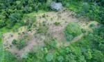 Plantio de 10 mil mudas de árvores nativas do Estado foi realizado em três propriedades localizadas em Taquaruçu Grande