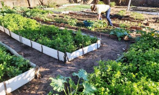 Servidor Alcides Patrício de Sousa cuida da horta com dedicação