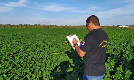Técnicos da Adapec realizam monitoramento das lavouras de soja rotineiramente para controle da ferrugem asiática