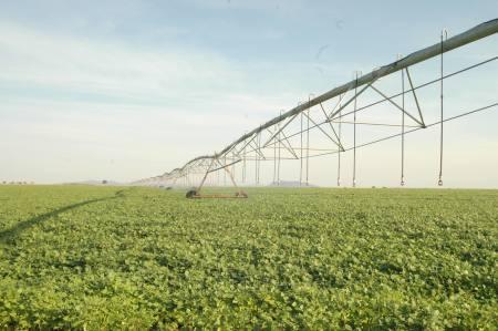 Estudo da consultoria Agência Rural prevê novo crescimento da área plantada de soja no Brasil e no Tocantins, que deverá ser o 4º no ranking nacional