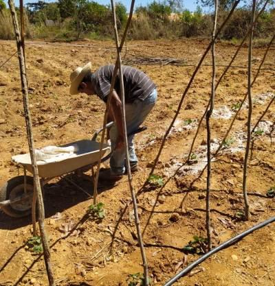 Preparo do cultivo da hortaliça