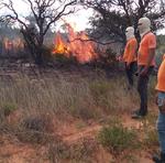Manejo Integrado do Fogo minimiza os riscos de incêndios na APA Jalapão