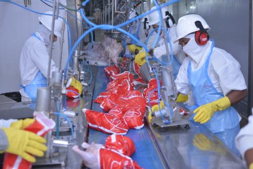 Indústria frigorífica Frango Americano emprega diretamente 1.500 pessoas em Aguiarnópolis.