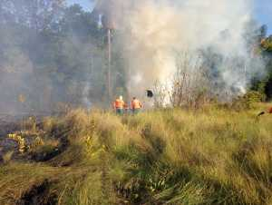 Brigadistas foram acionados e atuaram de maneira ostensiva para evitar que fogo se alastrasse