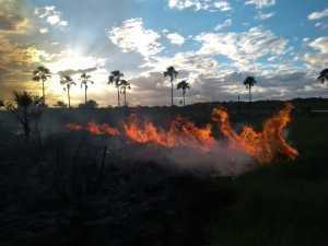 Equipe de combate aos incêndios no PEJ trabalharam sem interrupção para eliminar todos os focos