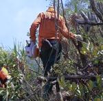 Quando focos são detectados, equipes trabalham de maneira continua, no sistema de revezamento, até debelar as chamas