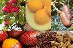 Tocantins possui grande variedade de frutos do cerrado