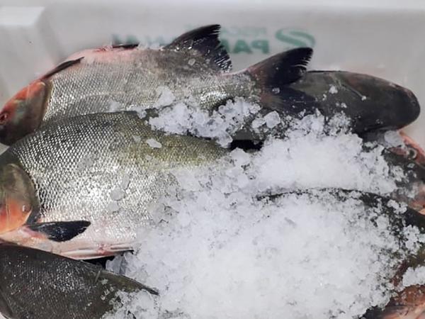 O pescado com o registro no serviço de inspeção estadual poderá ser comercializado em todos os municípios tocantinenses