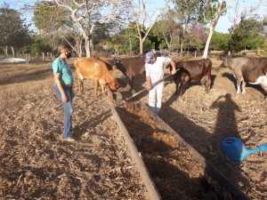 Produtor recebe assistência técnica do Ruraltins do projeto Balde Cheio
