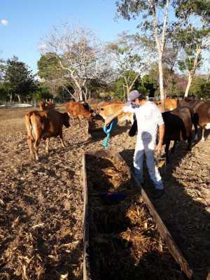 Podutor conta, no momento, com 17 vacas, destas, 10 em período de lactação