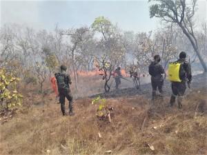 Militares do Exército, Corpo de Bombeiros e Defesa Civil Estadual combatem incêndios florestal em Paranã