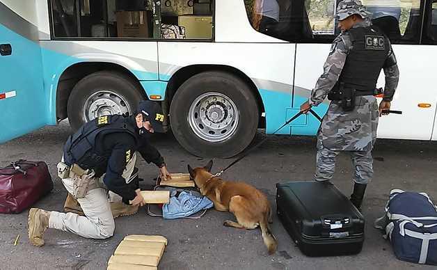 Cão de faro de entorpecentes Sniper localiza droga dentro de mala.