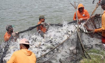 Governo do Tocantins disponibiliza R$ 10 milhões para Programa Tilápia