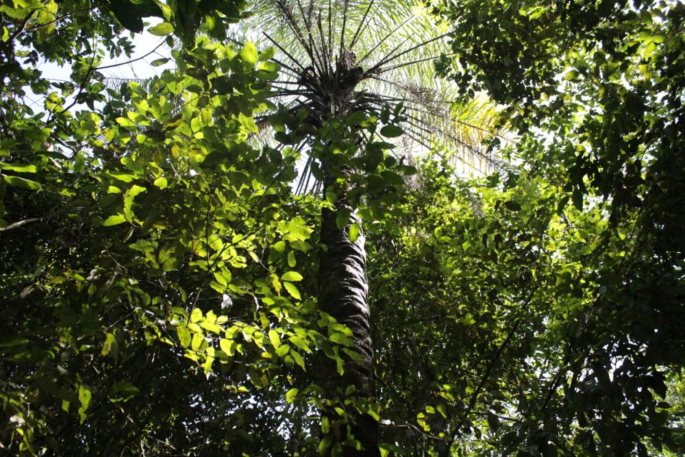 Parque Estadual do Cantão (PEC)