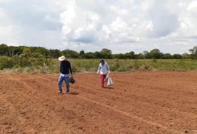 Os técnicos da Secretaria da Agricultura iniciaram o plantio da mandioca