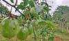 Técnicos do Ruraltins e da Agricultura recebem capacitação voltada para o cultivo de maracujá - Governo do Tocantins
