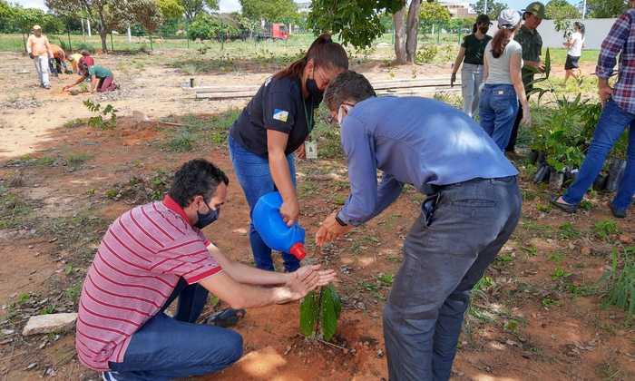 Servidores do Naturatins faz plantio de mudas frutíferas entorno do novo prédio_Patrícia Mascarenhas-Governo do Tocantins.jpeg