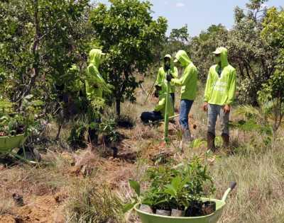 Foram plantadas durante o ano, 34 mil mudas nativa, a fim de recuperar a fauna e flora de áreas degradadas