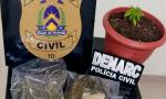 Drogas apreendidas pela Polícia Civil na casa de suspeito de tráfico em Araguaína