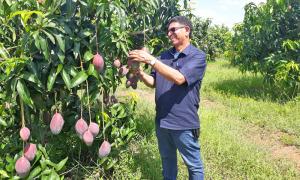 Ruraltins realizou 980 visitas técnicas presenciais a propriedades rurais em 2020 - Ruraltins/Governo do Tocantins