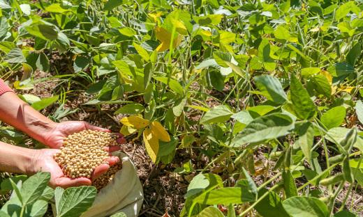 Projeto de Base Rural desenvolvido pela Unitins em Formoso do Araguaia com apoio da Fapt e Finep