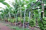 Workshop On-line visa à capacitação dos irrigantes do Projeto Polo de Fruticultura Irrigada São João, no município de Porto Nacional