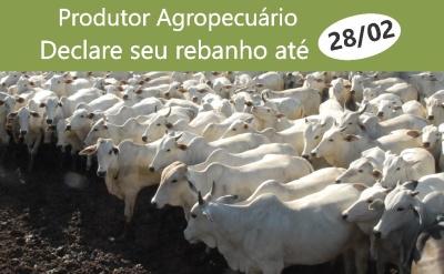 16,5%% dos produtores agropecuários do Tocantins ainda precisam entregar a Declaração do Rebanho