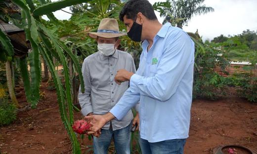 Produtor conta com assistência técnica do Ruraltins no cultivo da fruta
