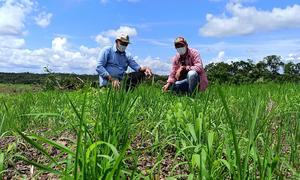 Na propriedade, o jovem agricultor, orientado pelo técnico do Ruraltins, investiu no cultivar de arroz de terras altas resistente a herbicida