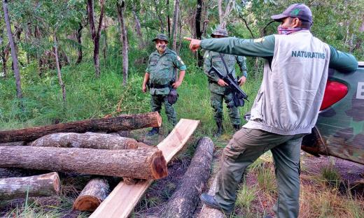 Fiscalização terrestre encontra madeira retirada no PA  Onalício Barros