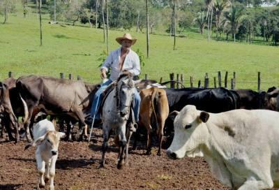 Fazenda de gado leiteiro, município de Guaraí