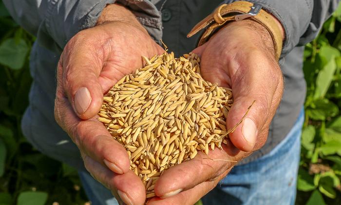 01 . Agricultura do Tocantins tem tido investimentos científicos com apoio do Governo por meio da FAPT e Unitins - Katriel Bernardes_700x420.jpg