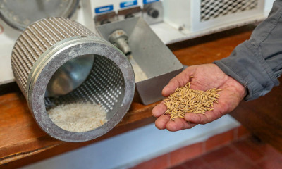 Estado está produzindo sementes de arroz genuinamente tocantinense e, em breve, estará disponível aos produtores