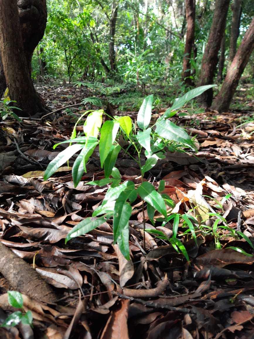 Foto 1 O plantio de espécies nativas contribui com conservação do solo – Acervo Naturatins-Divulgação.jpg